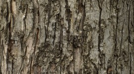 The Texture Of The Tree Wallpaper Gallery