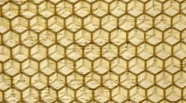Wax High Quality Wallpaper