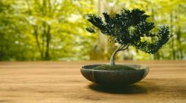 4K Bonsai Tree Desktop Wallpaper HD