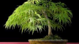 4K Bonsai Tree Photo