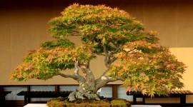 4K Bonsai Tree Photo Download