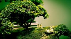 4K Bonsai Tree Wallpaper
