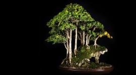 4K Bonsai Tree Wallpaper For Desktop