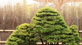4K Bonsai Tree Wallpaper For IPhone