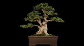 4K Bonsai Tree Wallpaper For PC