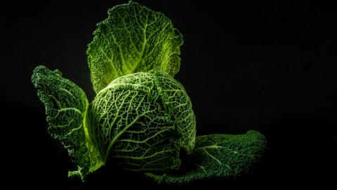 4K Cabbage wallpapers high quality