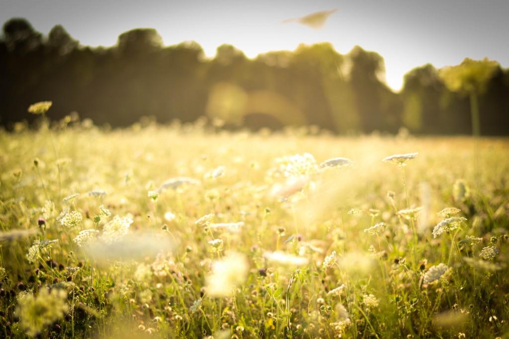 4K Flowers Field wallpapers HD