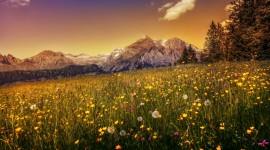 4K Flowers Field Desktop Wallpaper