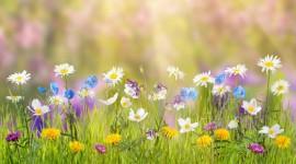 4K Flowers Field Image Download