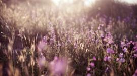 4K Flowers Field Photo