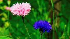 4K Flowers Field Photo Download