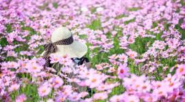 4K Flowers Field Photo Free