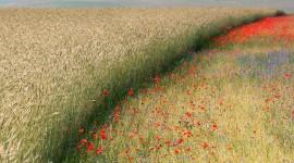 4K Flowers Field Wallpaper 1080p