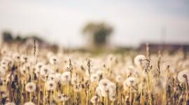 4K Flowers Field Wallpaper Background