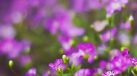 4K Flowers Field Wallpaper For Android#1