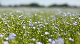 4K Flowers Field Wallpaper For Desktop