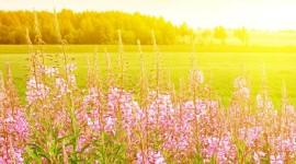 4K Flowers Field Wallpaper For IPhone