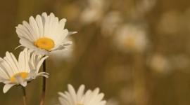 4K Flowers Field Wallpaper For IPhone Free