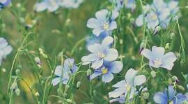 4K Flowers Field Wallpaper For Mobile#1