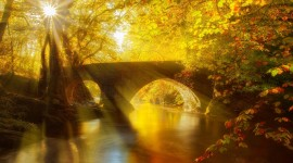 4K Sun Beam Forest Image Download