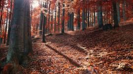4K Sun Beam Forest Photo