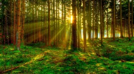 4K Sun Beam Forest Photo Download
