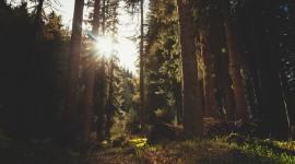 4K Sun Beam Forest Photo Free