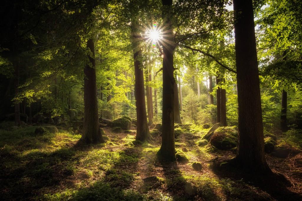 4K Sun Beam Forest wallpapers HD