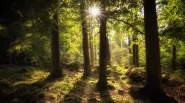 4K Sun Beam Forest Wallpaper