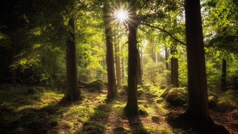 4K Sun Beam Forest wallpapers high quality