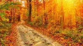 4K Sun Beam Forest Wallpaper For Desktop