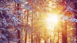 4K Sun Beam Forest Wallpaper For Mobile