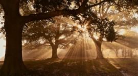 4K Sun Beam Forest Wallpaper Full HD