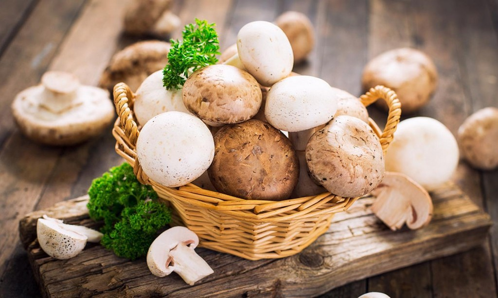 Champignon wallpapers HD