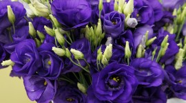 Eustoma Wallpaper For Desktop