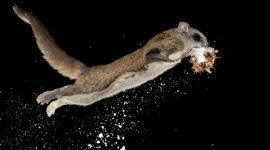 Flying Squirrel Wallpaper 1080p