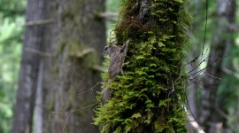 Flying Squirrel Wallpaper High Definition