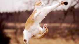 Jumping Cat Best Wallpaper