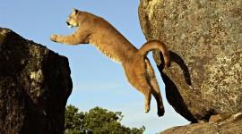 Jumping Cat Desktop Wallpaper