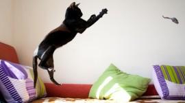 Jumping Cat Desktop Wallpaper For PC