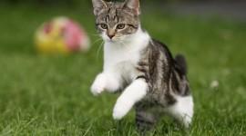 Jumping Cat High Quality Wallpaper
