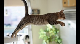 Jumping Cat Wallpaper 1080p