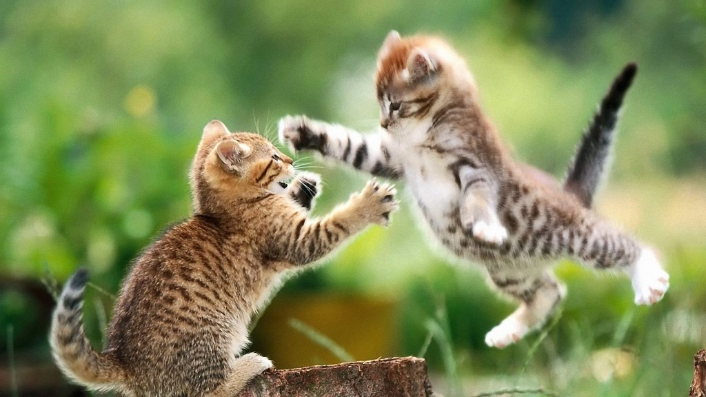 Jumping Cat wallpapers HD