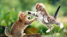 Jumping Cat Wallpaper Background
