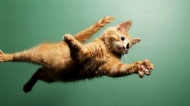 Jumping Cat Wallpaper Download