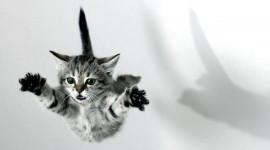Jumping Cat Wallpaper Free