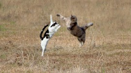 Jumping Cat Wallpaper HD