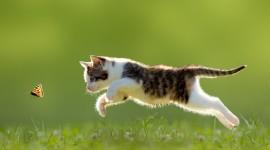 Jumping Cat Wallpaper HQ