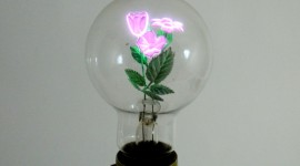 Light Bulb Flowers Wallpaper Full HD