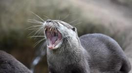 Otter Desktop Wallpaper HD